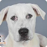 Adopt A Pet :: Deja - Effort, PA