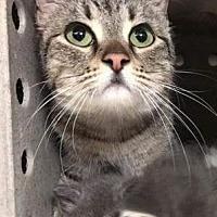 Adopt A Pet :: Serena - San Bernardino, CA