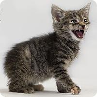 Adopt A Pet :: Gypsy - Washburn, WI