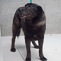 Adopt A Pet :: Lydia - New Martinsville, WV