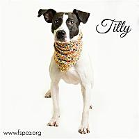 Adopt A Pet :: Tilly - Troy, VA