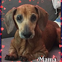 Adopt A Pet :: Mama - Green Cove Springs, FL