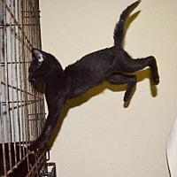 Adopt A Pet :: Randall - Hammond, LA