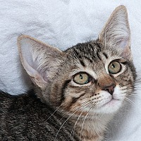 Adopt A Pet :: Tanya M - Sacramento, CA