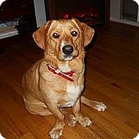 Adopt A Pet :: Cutie - Charlotte, NC