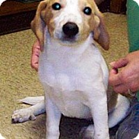 Adopt A Pet :: SALLY - Glastonbury, CT