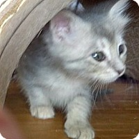 Adopt A Pet :: Bubbly - Dallas, TX