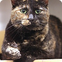 Adopt A Pet :: Zuleyka - Sacramento, CA