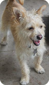 Terrier (Unknown Type, Small) Mix Dog for adoption in Woonsocket, Rhode Island - Tuesday