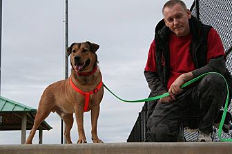 Shepherd (Unknown Type)/Labrador Retriever Mix Dog for adoption in Lawrenceville, Georgia - Jaxson