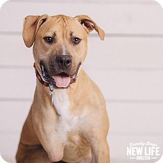 Pit Bull Terrier/Mastiff Mix Dog for adoption in Portland, Oregon - Jett