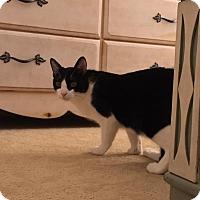 Adopt A Pet :: Tweety - Fredericksburg, VA