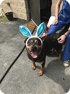 Adopt A Pet :: Rocki  - Henderson, NC