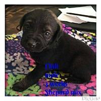 Adopt A Pet :: CHILI - New York, NY