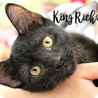 Adopt A Pet :: King Richard - Wichita Falls, TX