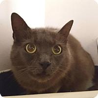 Adopt A Pet :: Kyoshi - Salisbury, MA