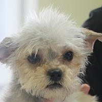 Adopt A Pet :: Sabrina - needs a happy ending - Woonsocket, RI