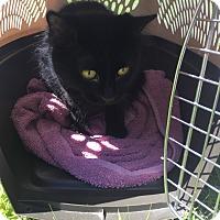 Adopt A Pet :: Fluffy - Bainsville, ON