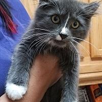 Adopt A Pet :: Judy - Rochester, MN