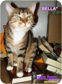 Domestic Shorthair Cat for adoption in Cedar Creek, Texas - Bella