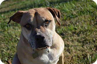 Pit Bull Terrier Mix Dog for adoption in Owasso, Oklahoma - Gabby