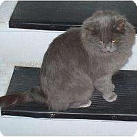 Adopt A Pet :: Velda - Saskatoon, SK