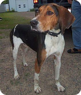 Hound (Unknown Type) Mix Dog for adoption in Medford, Wisconsin - BANJO