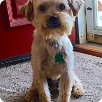 Adopt A Pet :: *Ryder - PENDING - Westport, CT
