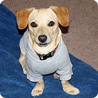 Adopt A Pet :: Chance - I love to play! - Yorba Linda, CA