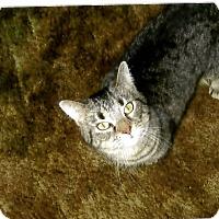 Adopt A Pet :: COURTESY POST - Sugar - Chambersburg, PA