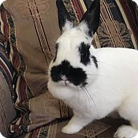Adopt A Pet :: Esme - Watauga, TX