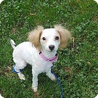 Adopt A Pet :: Ryan - Troy, MI