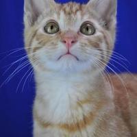 Adopt A Pet :: Davy - Cabot, AR