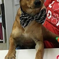 Adopt A Pet :: Koda - Centerville, GA