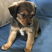 Adopt A Pet :: Jemma - Tumwater, WA