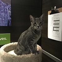 Adopt A Pet :: Sebastian - Winchester, CA