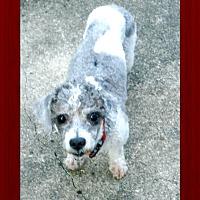 Adopt A Pet :: Max - Newfield, NJ