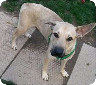 German Shepherd Dog Mix Dog for adoption in Conesus, New York - Sierra
