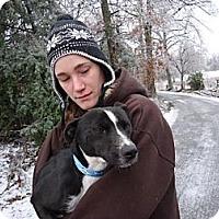 Adopt A Pet :: Olaf - Albert Lea, MN