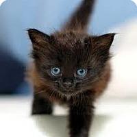 Adopt A Pet :: Alaska - Lancaster, MA