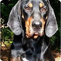 Adopt A Pet :: Kingston - Dallas, TX