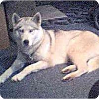 Adopt A Pet :: Makida - Belleville, MI
