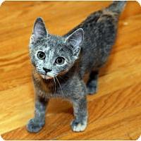 Adopt A Pet :: Celeste - Farmingdale, NY