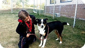 Collie Mix Dog for adoption in Fruit Heights, Utah - Sabrina