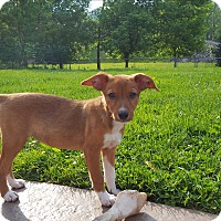 Adopt A Pet :: Ruby - Middlesex, NJ