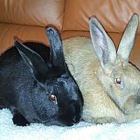 Adopt A Pet :: Truffle & Flap - Watauga, TX