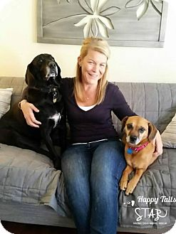 Terrier (Unknown Type, Medium) Mix Dog for adoption in Northville, Michigan - zCassie - ADOPTED