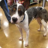 Adopt A Pet :: Chester - Sugar Grove, IL