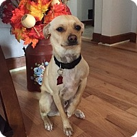 Adopt A Pet :: SPARKY-loves dogs and cuddling - Seattle, WA
