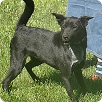 Adopt A Pet :: Arlo - Stockport, OH